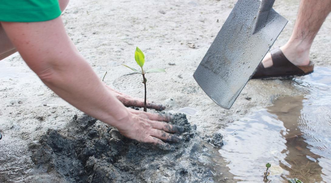 フィジーでマングローブ再生に取り組む環境保護ボランティアたち
